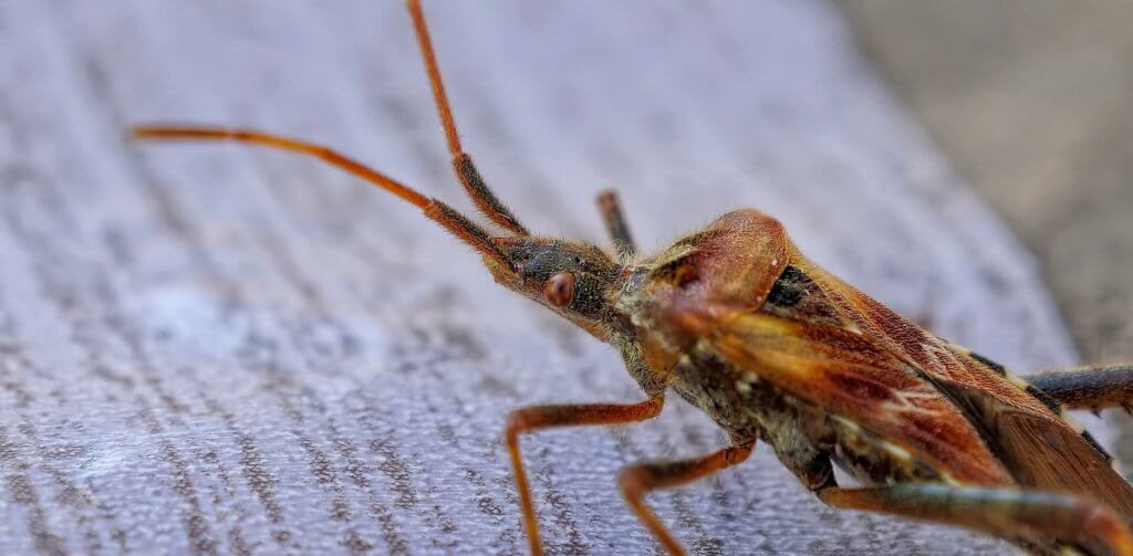Insekten entfernen Kammerjäger