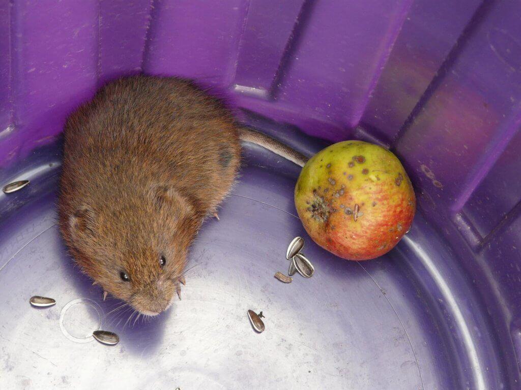 Mäuse entfernen