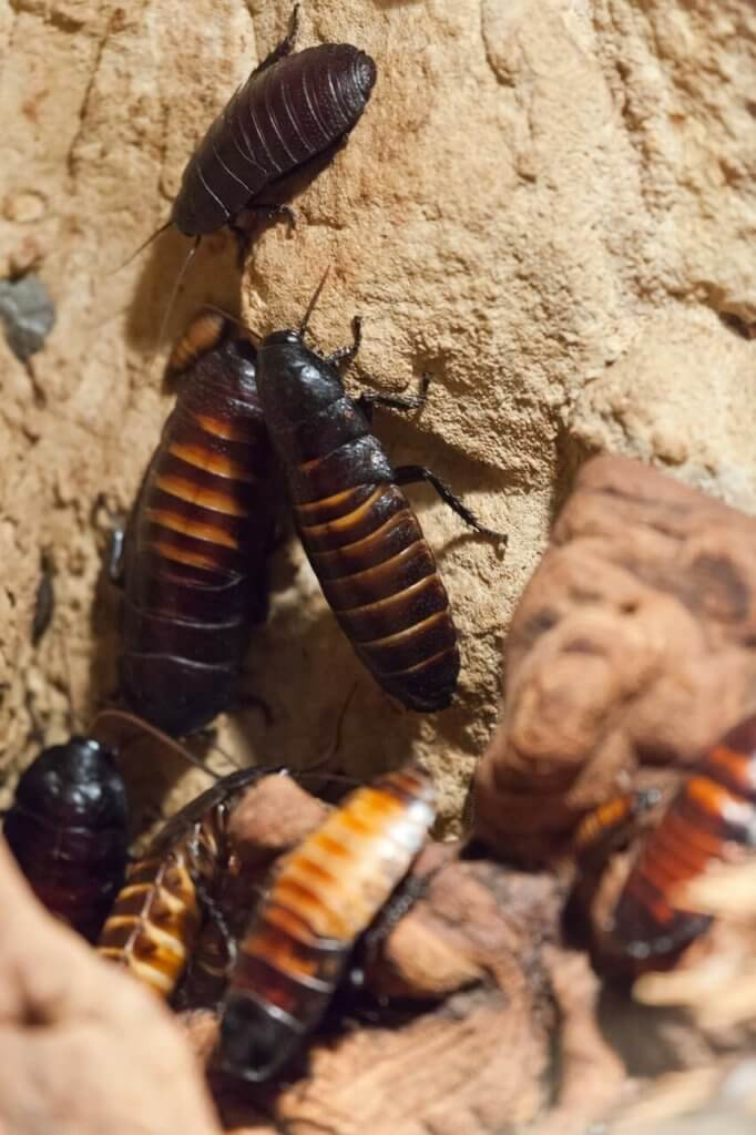 Kakerlaken beseitigen