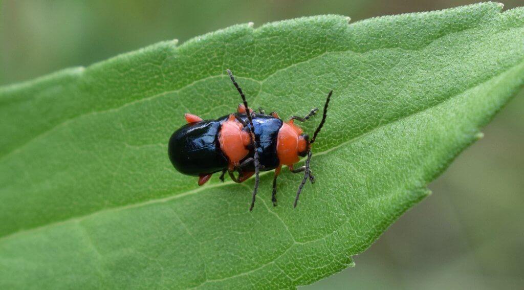 Käfer und Insekten beseitigen
